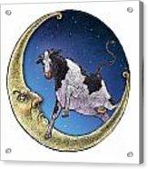 Cow And Moon Acrylic Print
