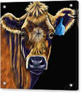 Cow Art - Lucky Number Seven Acrylic Print