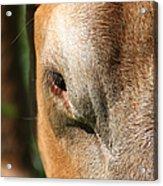 Cow Closeup 7d22397 Acrylic Print