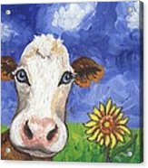 Cow Fantasy One Acrylic Print
