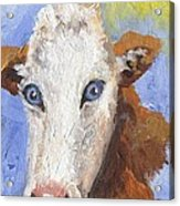 Cow Fantasy Three Acrylic Print
