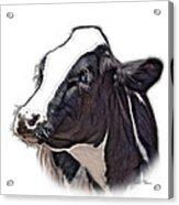 Cow Holstein - 0034 Fs Acrylic Print