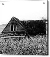 Cow House Black And White Acrylic Print