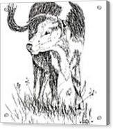 Cow In Pen And Ink Acrylic Print