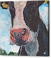 Cow No 05. 0556 Irish Friesian Cow Acrylic Print