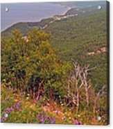 Cow Vetch In Cape Breton Highlands Np-ns Acrylic Print