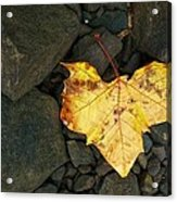 Coward's Heart Acrylic Print