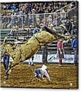 Cowboy Down Acrylic Print