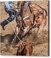 Cowboy Ropes Calf  Acrylic Print