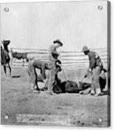 Cowboys, 1888 Acrylic Print