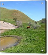 Cows Along The Rolling Hills Landscape Of The Black Diamond Mines In Antioch California 5d22304 Acrylic Print