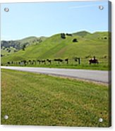 Cows Along The Rolling Hills Landscape Of The Black Diamond Mines In Antioch California 5d22326 Acrylic Print by Wingsdomain Art and Photography