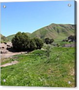 Cows Along The Rolling Landscapes Of The Black Diamond Mines In Antioch California 5d22291 Acrylic Print by Wingsdomain Art and Photography