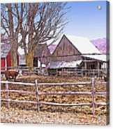 Cows At Jenne Farm Acrylic Print