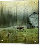 Cows By The Road Acrylic Print by Kathy Jennings