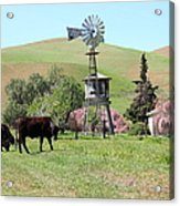 Cows Home On The Ranch At The Black Diamond Mines In Antioch California 5d22345 Acrylic Print by Wingsdomain Art and Photography