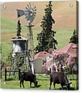 Cows Home On The Ranch At The Black Diamond Mines In Antioch California 5d22354 Acrylic Print by Wingsdomain Art and Photography
