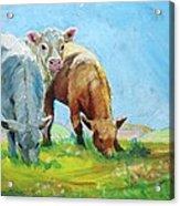 Cows Landscape Acrylic Print