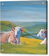 Cows Lying Down Painting Acrylic Print