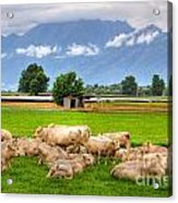 Cows On The Green Field Acrylic Print