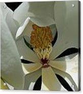 Coy Magnolia Acrylic Print