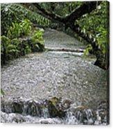 Coyaba River Gardens 6 Acrylic Print