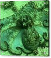 Cozumel Octopus Acrylic Print