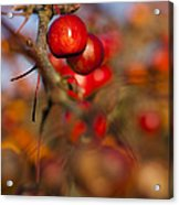Crab Apple Bright Acrylic Print