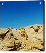 Crab Climb Blowing Sand 8/24 Acrylic Print