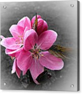 Crabapple Flower Acrylic Print