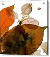 Crabapple Rose I Acrylic Print