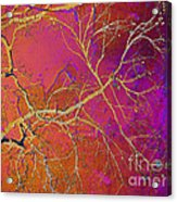 Crackling Branches Acrylic Print