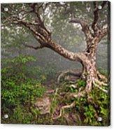 Craggy Gardens Blue Ridge Parkway Asheville Nc - Enduring Craggy Acrylic Print by Dave Allen