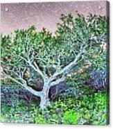 Craggy Gardens North Carolina Blue Ridge Parkway Autumn Nc Sceni Acrylic Print