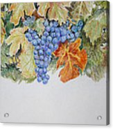 Cran-grapes Acrylic Print