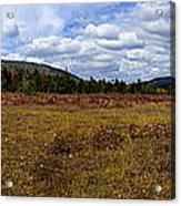 Cranberry Glades Panoramic Acrylic Print