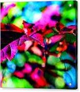 Cranberry Leaf Acrylic Print