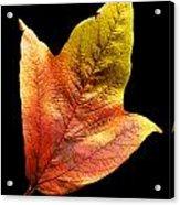 Cranberry Tree Leaf Isolated On White Acrylic Print
