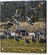 Crane Landing Strip Acrylic Print