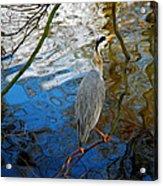 Crane Perching 1 Acrylic Print