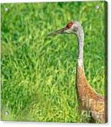 Crane Profile Acrylic Print