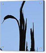Crane Wood Acrylic Print