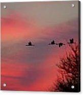 Cranes On A Dusky Sky Acrylic Print