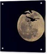 Cranes Over The Moon Acrylic Print