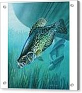 Crappie And Boat Acrylic Print by JQ Licensing