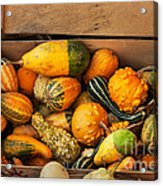 Crate Filled With Pumpkins And Gourts Acrylic Print