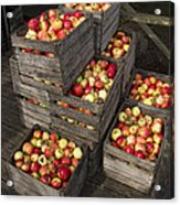 Crated Apples Acrylic Print