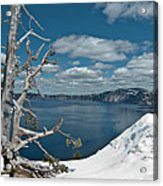 Crater Lake Tree Acrylic Print