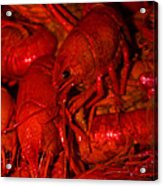 Crawfish Acrylic Print
