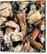 Crayfish Acrylic Print